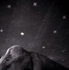 Keith Carter - Elephant and Stars