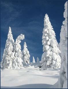 arbore - Page 3 Winter Love, Winter Is Here, Winter Snow, Winter White, Winter Scenery, Winter Trees, Snow Covered Trees, Winter Fairy, Snow Scenes