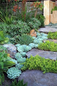 Garden Landscaping Ideas for Front and Backyard Landscaping with Succulents. -Garden Landscaping Ideas- Landscaping Ideas for Front and Backyard Landscaping with Succulents. -Garden Landscaping Ideas-Landscaping with Succulents. Succulents Garden, Planting Flowers, Succulent Plants, Rockery Garden, Succulent Ideas, Succulent Rock Garden, Shade Garden, Succulent Gardening, Succulent Outdoor