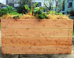 We provide custom made, raised veggie gardens using cypress sleepers. Rot & termite resistant without treatment, they are the safest option for veggie gardens. Raised Garden Beds, Raised Beds, Wicking Beds, Fruit Garden, Veggie Gardens, Organic Gardening, Gardening Services, Leaves, Vegetables