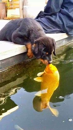 Puppy Kissing Fish