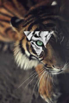 Immagine di tiger, animal, and hipster