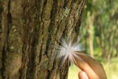 Mondd meg mikor születtél, mi megmondjuk melyik fa vagy te! Ebből kaphatod a legtöbb lelki erőt és gyógyulást! Karma, Dandelion, Plants, Tibet, Dandelions, Flora, Plant, Planting