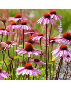 Bouquet, Flowers, Plants, Leo, Bunch Of Flowers, Florals, Bouquets, Plant, Lion
