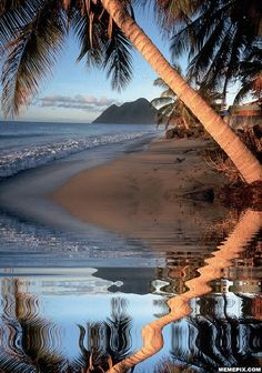 Tropical beach... I think I'd rather be there today, maybe tomorrow too!