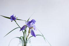 Spring Pasta with Roasted Garlic Sauce Garlic Sauce, Roasted Garlic, Ultra Violet, Pasta, Gardening, Spring, Recipes, Photography, Photograph