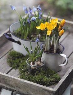 28 ideas for flowers spring decoration center pieces Saffron Crocus, Crocus Bulbs, Diy Osterschmuck, Easy Diy, Diy Easter Decorations, Diy Decoration, Decor Ideas, Garden Decorations, Decorating Ideas