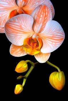 Blumen garden plants orchids orange orchid A Muscle Building Tip That May Work Wonders Article Body: Unusual Flowers, Amazing Flowers, Beautiful Flowers, Beautiful Gorgeous, Orchidaceae, Flowers Nature, Orchid Flowers, White Orchids, Paper Flowers