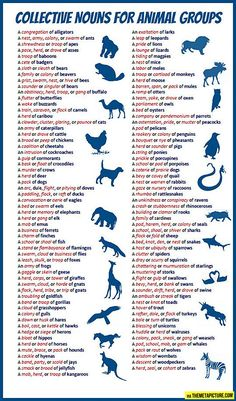 Collective nouns for animal groups - English vocabulary English Writing Skills, English Lessons, English Vocabulary, Learn English, Improve English, English Words, English Grammar, Teaching English, English Language