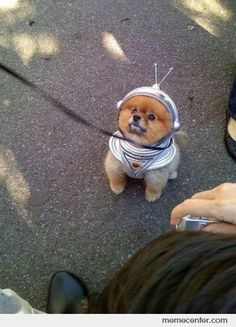 Pom-astronaut. @ Heather Early, this should be Ollie's Halloween costume this year!