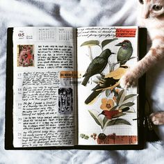 """924 Likes, 5 Comments - Journal Writing Inspirations™ (@thedailywriting) on Instagram: """"Journal Book inspiration by @nolitimire✨ .  __ We love to curate and share the best daily journal…"""""""