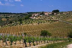 Wine Travel Guide: Italy, Tuscany, Between San Gimignano and Siena
