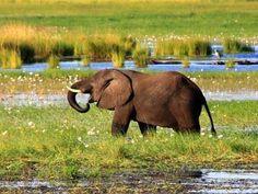 South Africa Wildlife, Big 5, November 2015, Zimbabwe, Cape Town, Aurora, Safari, Cruise, Elephant