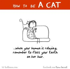 HOW TO BE A CAT: When your human is relaxing, remember to floss your teeth on her hair.