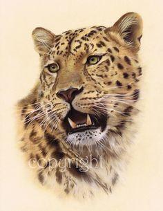 Leopard head limited edition wildlife art print by AnimalSpiritArt, £45.00