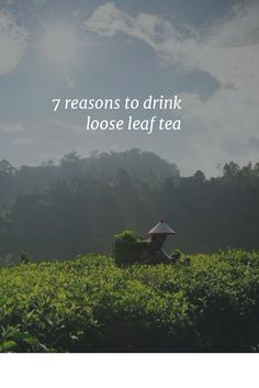 7 reasons to drink loose leaf tea; ditch the teabags!! :D