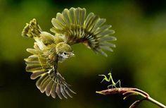 鳥 VS カマキリ perfect animalshot