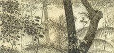Gravura Brasileira - Luiz Manni - Da floresta, água forte Gravura em metal , 15x25cm - R$360