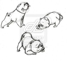 Bottom one is exactly the type of Bulldog I want for my next tattoo :)    bulldog by zmode82.deviantart.com on @deviantART