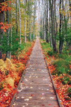 "Acadia National Park, Maine ~ ""Wild Gardens Path"" Photo: Vincent James"
