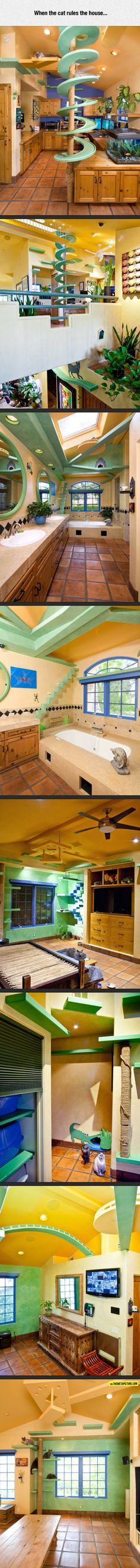 Cat People Housing - Spent some money they did....    Crazy they are....