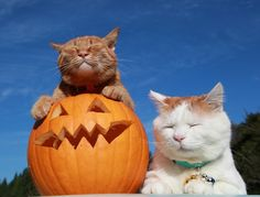 great pumpkin lovers