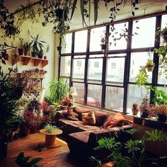 Very Boho. Hanging garden, and probably what my sunroom will end up like thanks to my plant hoarding problem.