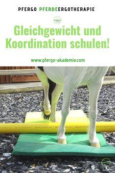 Die Körperwahrnehmung spielt bei Pferden eine große Rolle. Die Pferdeergotherapie kann Pferden zu einer besseren Körperwahrnehmung und damit zu mehr Trittsicherheit, Balance und Ausgeglichenheit verhelfen. So wird Dein Pferd trittsicherer, balancierter und koordinierter!  #pfergo #pferdeergotherapie #bodenarbeit #bodenarbeitmitpferden #pferdegesundheit