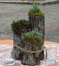 Succulents in Wedding Table Settings | Rustic 4 Weddings: Rustic Succulent Plant Holder
