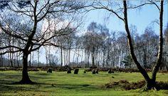 Nine Ladies Stone Circle, Stanton Moor, Peak District National Park, Derbyshire, England