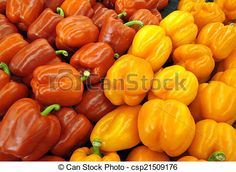 Freshly picked peppers for salads and cooking.
