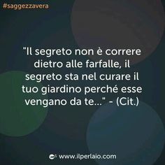 """Cit. """"Don't run around chasing butterflies, the secret is to take care of your garden, and the butterflies will come to you""""."""