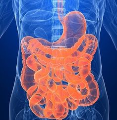 Fecal Transplants: Can Help Colitis, Candida, IBS and More! Sounds discussing but for real.
