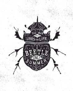 bmd design beetle (I want to know where I can buy this print)