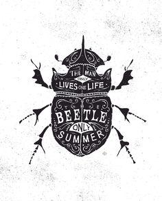 beetle / bmd design
