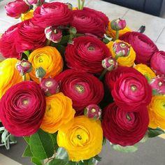 #flowpetitsplaisirs #jour19 offrir/recevoir un bouquet de fleurs  #renoncules :-)