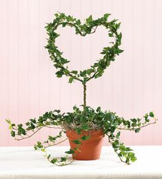 Topiary Main image for Heart-Shaped Ivy Topiary More - Ivy Plant Indoor, Indoor Garden, Garden Art, Outdoor Gardens, Garden Ideas, Garden Projects, Topiary Plants, Ivy Plants, Organic Container Gardening