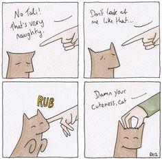 tentativi di punizioni per gatto