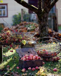 #allthebeautifulthings #autumn #october #apple #appletime #countryside #countryliving #kaimas #ruduo #spalis #obuoliai