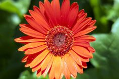How to earn the orange Daisy petal responsible for what I say and do by making a chore chart.
