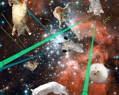 Cats in space.