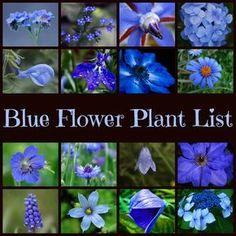 Blue Garden Plants List