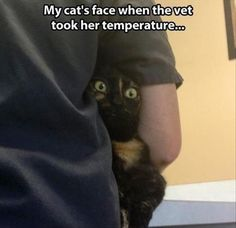 Attack Of The Funny Animals - 23 Pics