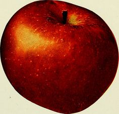 "Image from page 96 of ""The apples of New York"" (1905) 
