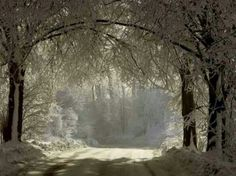 Love this snowy country road scene♡