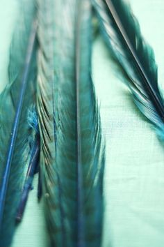 ♔ Boho Turquoise