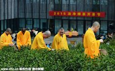Monks pick tea leaves in a tea plantation in Hangzhou, Zhejiang province, March 21, 2015.  More than 40 monks joined the tea-picking activity held in Fajing Temple in Hangzhou this year.   The Longjing tea leaves are grown by the monks themselves. https://www.pinterest.com/infoseekchina/china-travel-tourism-news/