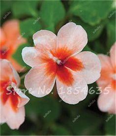 20Pcs/bag Red Camelias Impatiens Seeds Camellias Seeds Finger Flower Balsamina Garden Balsam Impatiens Balsamina Flower Seeds