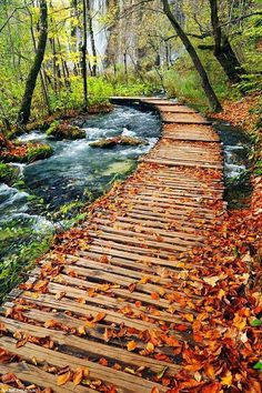 Autumn path in Plitvice Lakes National Park, Croatia.