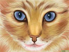 Katzensprache lernen – wikiHow